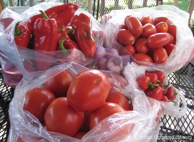 Tomato & Pepper Bounty   ©  Urban Cottage Life.com