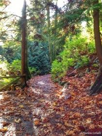 A Path Beckons in Stanley Park October 2014 | © Marlene Cornelis