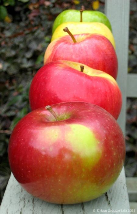 Apples | © UrbanCottageLife.com 2011